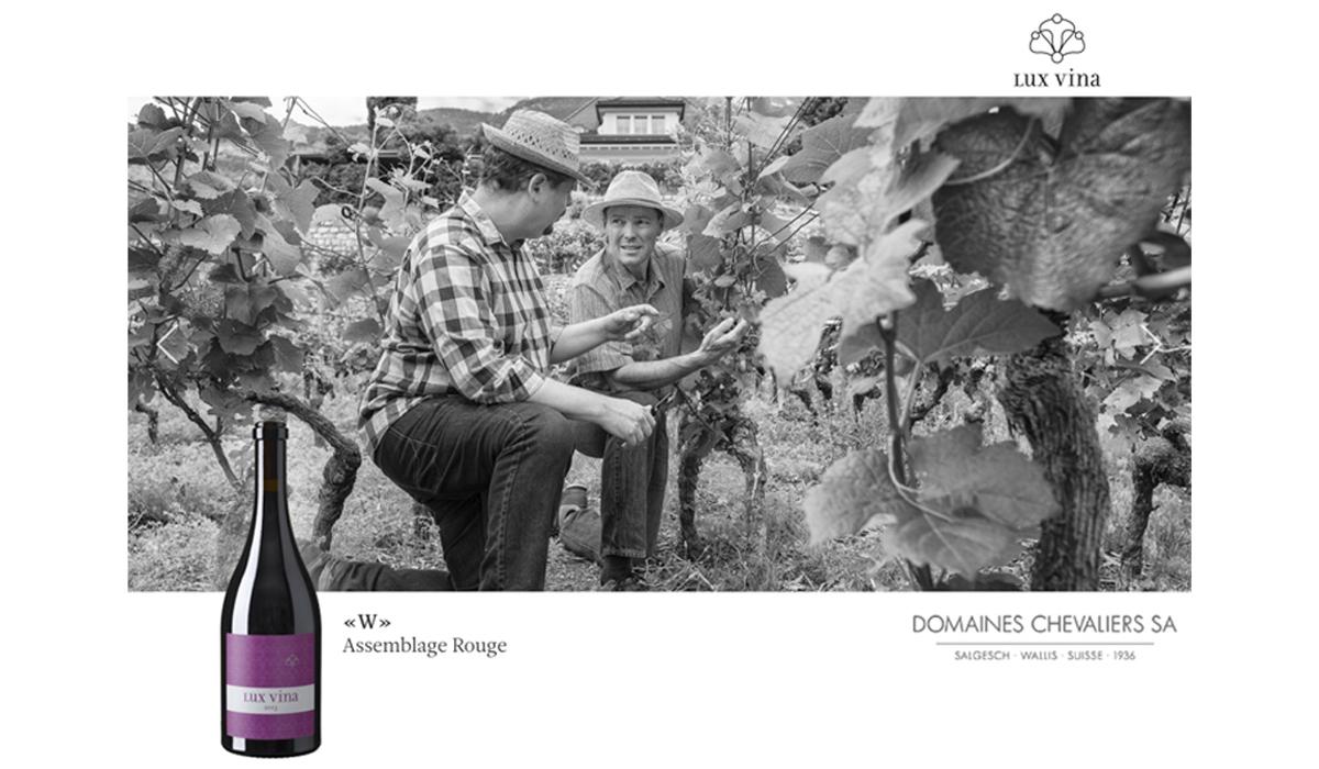 Wein Flaschen Fotografie Lux Vina Domaines des Chevalièrs zBrun Rebberg Reben Trauben